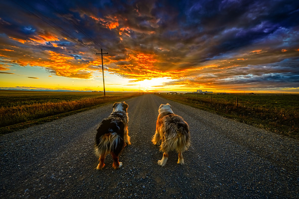 Northern Montana Sunset with my pups