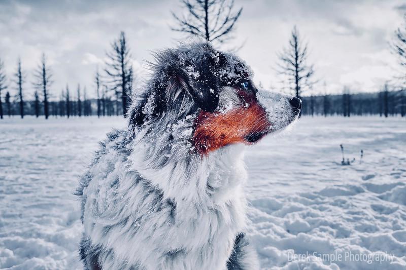 More Snow please