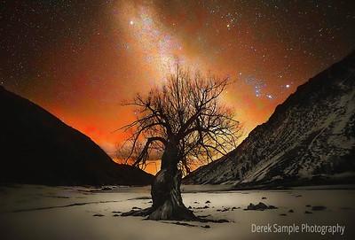 Favorite Tree at Lundy Lake