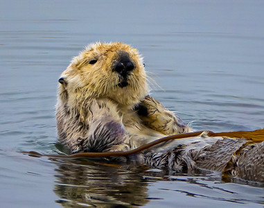 Otter waking up
