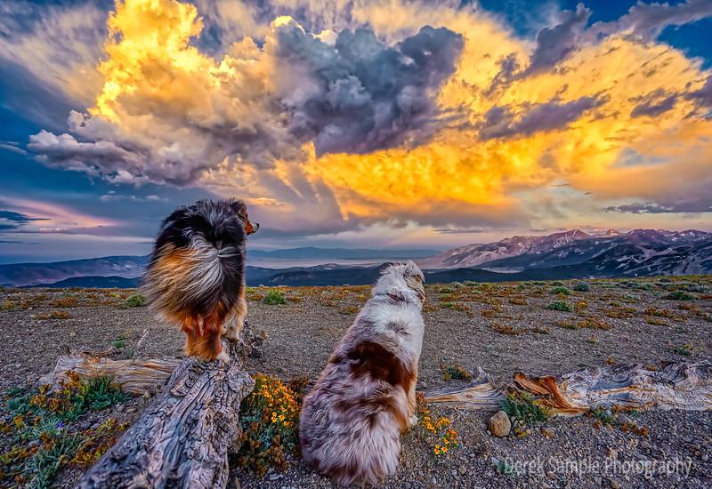 Dreams in Clouds