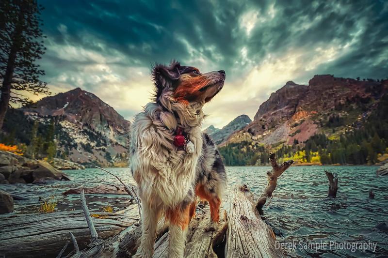 Maverick at Green Lake