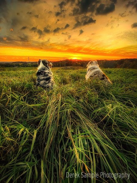 Pups in the Wild Grass during Sunset