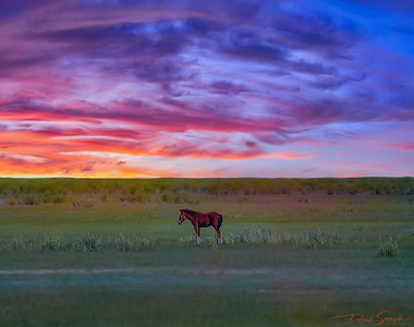 Lone Foal at Sunset