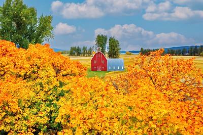 Fall Colors in Bigfork, Montana 10/14/21