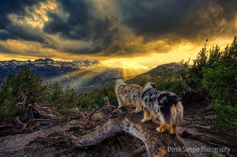 Pups watching a Summer Storm