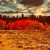 Deep Colors of Autumn