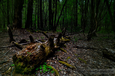 Life and Death in Cataloochee 4-30-2016