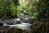Basin: Burdekin; Stream: Pla Creek; -21.1058S; 148.4944E; 20080209 002