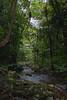 Basin: Burdekin; Stream: Pla Creek; -21.1058S; 148.4944E; 20080209 037