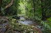 Basin: Burdekin; Stream: Pla Creek; -21.1058S; 148.4944E; 20080209 034