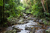 Basin: Burdekin; Stream: Pla Creek; -21.1058S; 148.4944E; 20080209 001