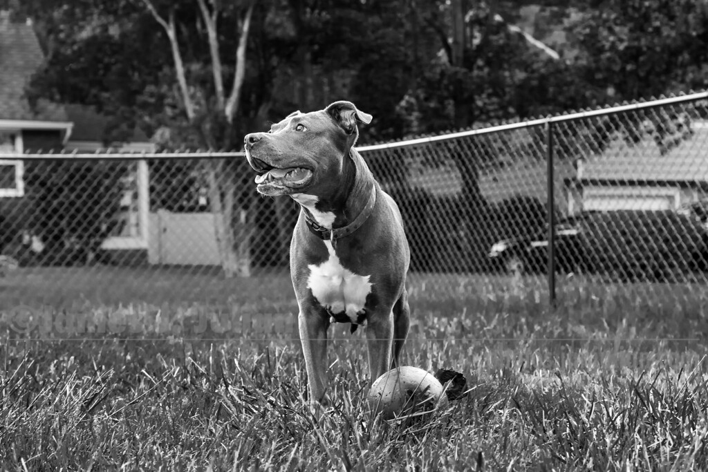 Lana Standing Tall with Her Toy BW