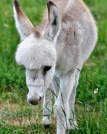 Vertical of Donkey