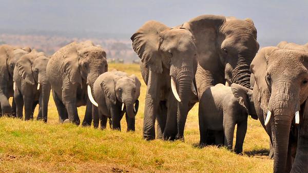 Elephants crossing the Mara best