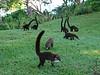 Costa Rica 2007 220
