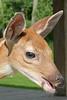 so cute Deer