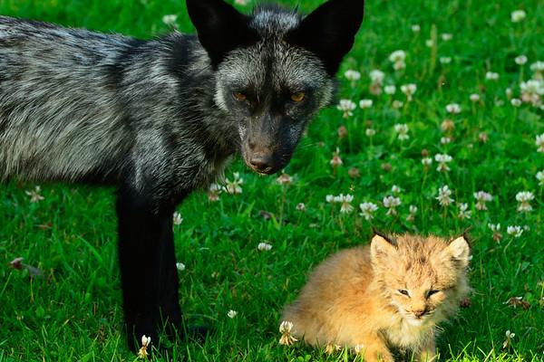 Roxy and Alex