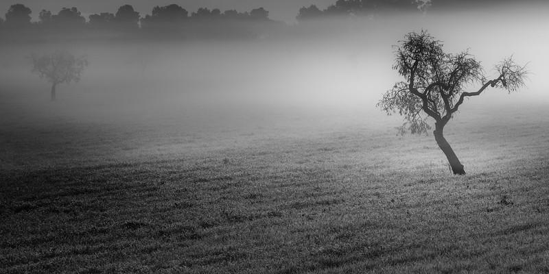 Almonds in a mystery mist
