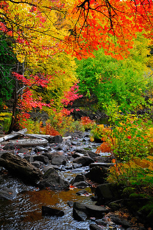Ragged stream and colorful leaves