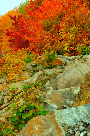 Leaves and trees and rocks
