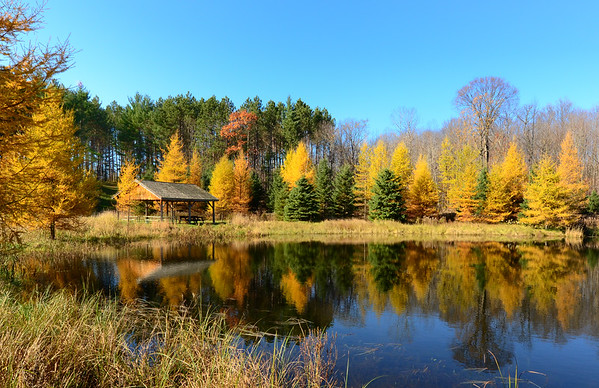 Colorful O'Hara Conservation Area