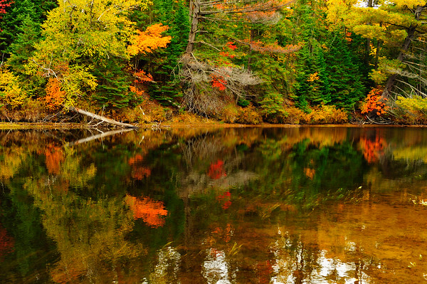 Reflections of Oxtongue