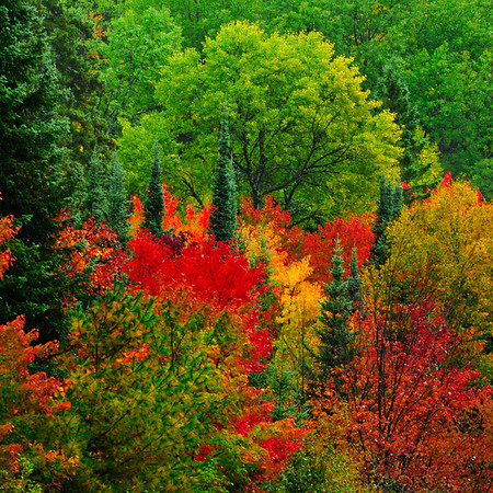 Great colors in Algonquin