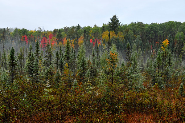 The colorful forest with mist