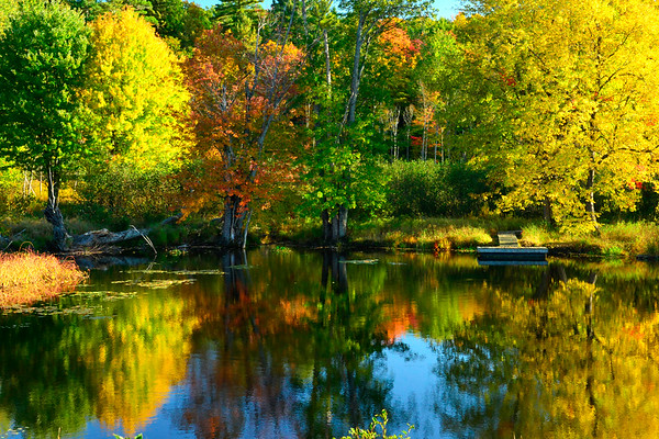 Colorful trees in pond