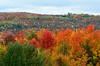 Beaver valley colors