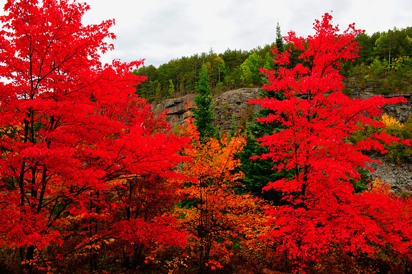 Big Red trees
