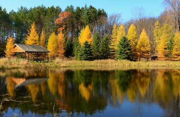 Tamarack's glistening on the lake