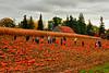 Pumpkin Patch at Knox Farms
