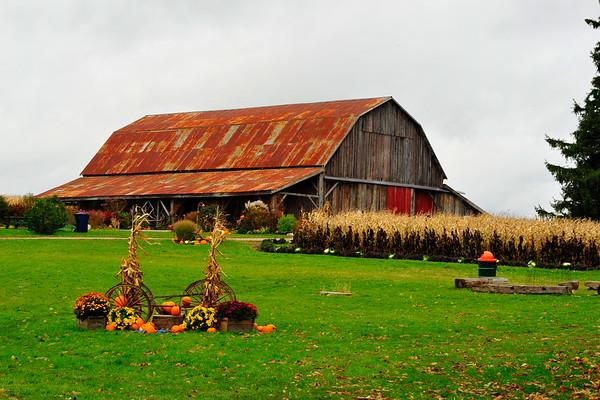 Knox Farm and pumpkins
