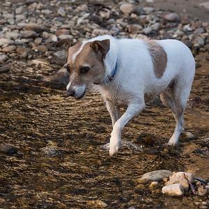 2016-03-24_Dog Walk_Zwit_0094