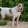 2016-05-26_Dog Walk_Zwit_0024