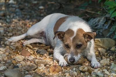 2016-05-26_Dog Walk_Zwit_0003