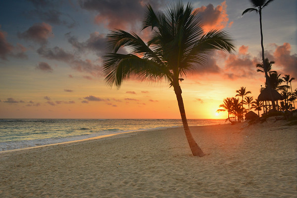Sunrise and Palm Tree