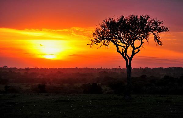 Africa - Masai Mara - 2011