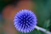 Blurred purple flower