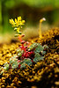 Wildflower growing frm moss