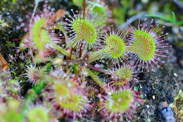 Prickly arrangement