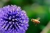 bee up close