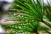 raindrops on plant