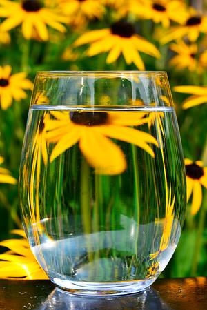 Flower thru glass