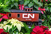 CN Train in Pointsettas