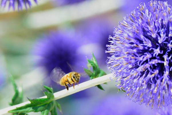 Bee on Stem