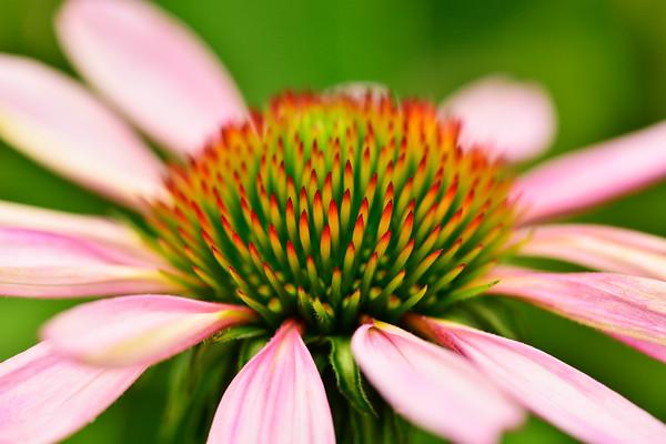 Prickly Flower like a Daisy