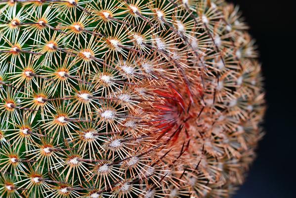 Cactus - Copy